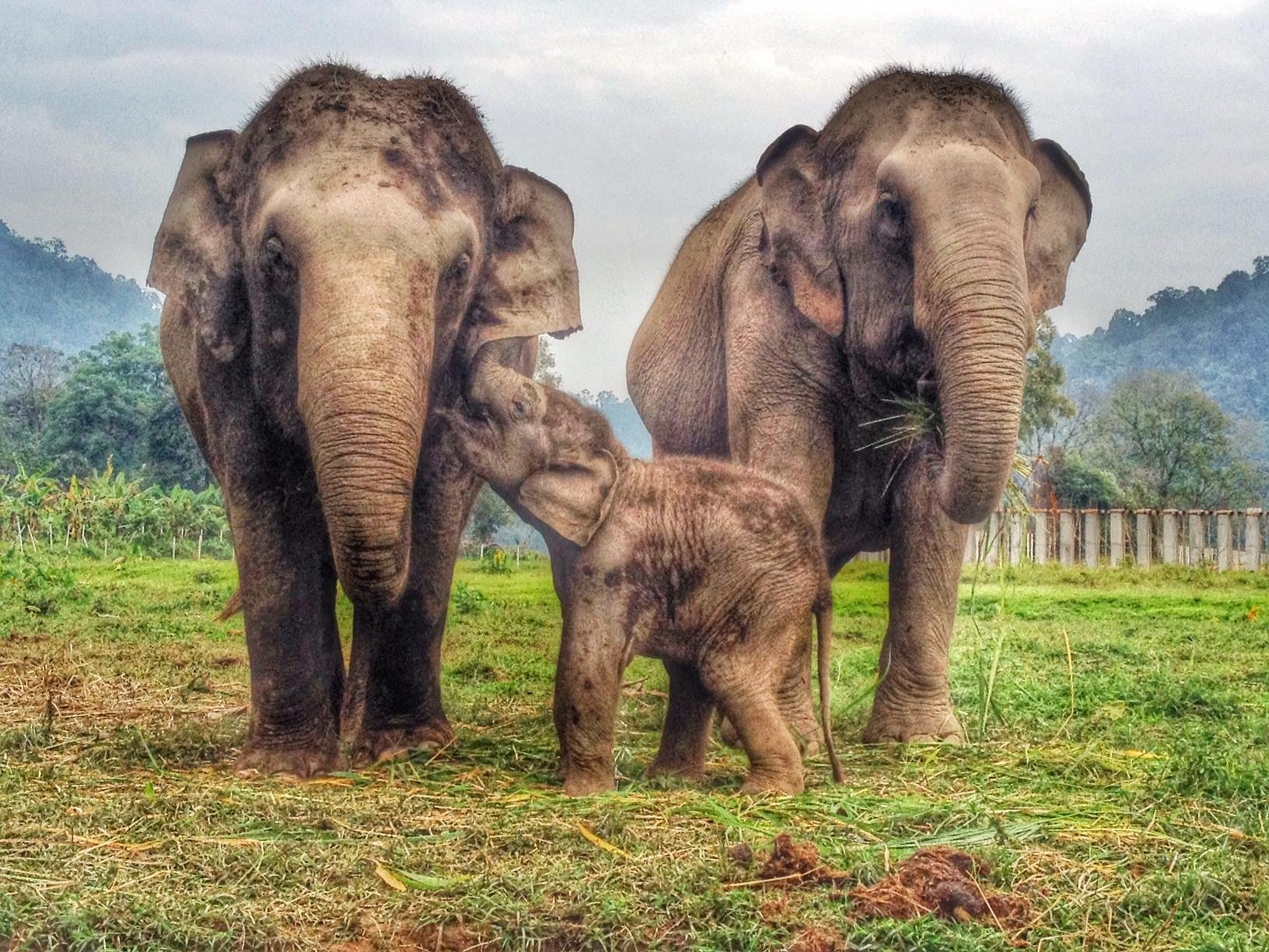 Our Favorite Elephant Videos in Thailand