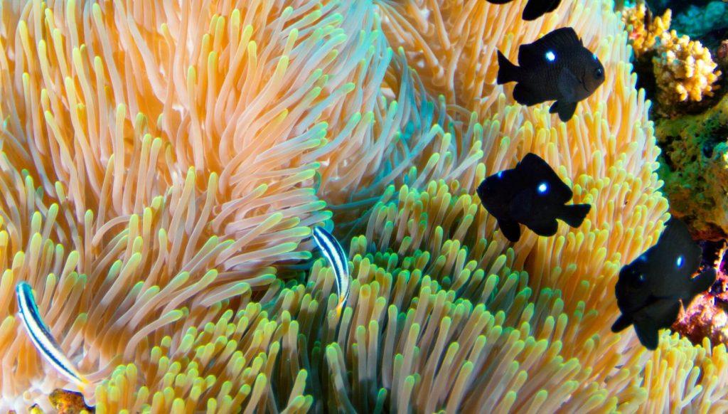 马尔代夫阿玛瑞豪沃达度假酒店珊瑚礁